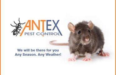 Antex Pest Control
